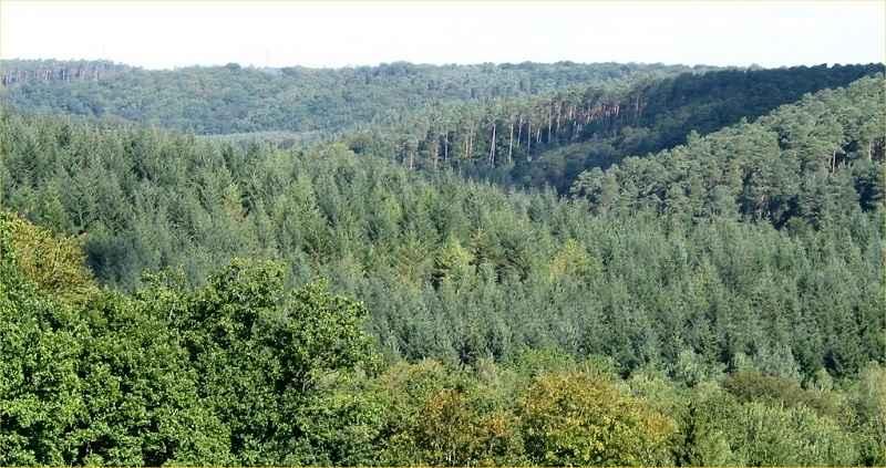 Forêt de Montfort © ONF, A. Le Belleguy