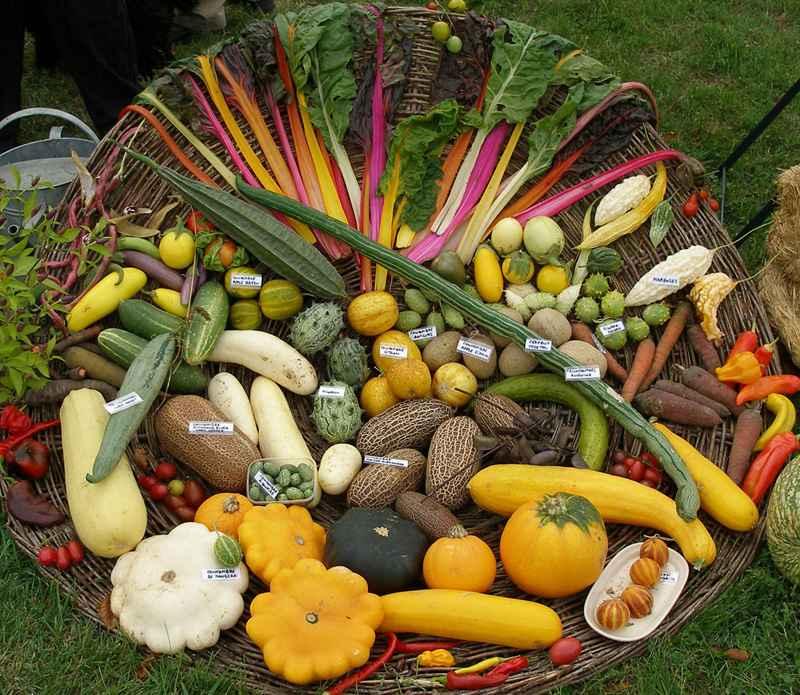 Potager de Beaumesnil © 1001 légumes