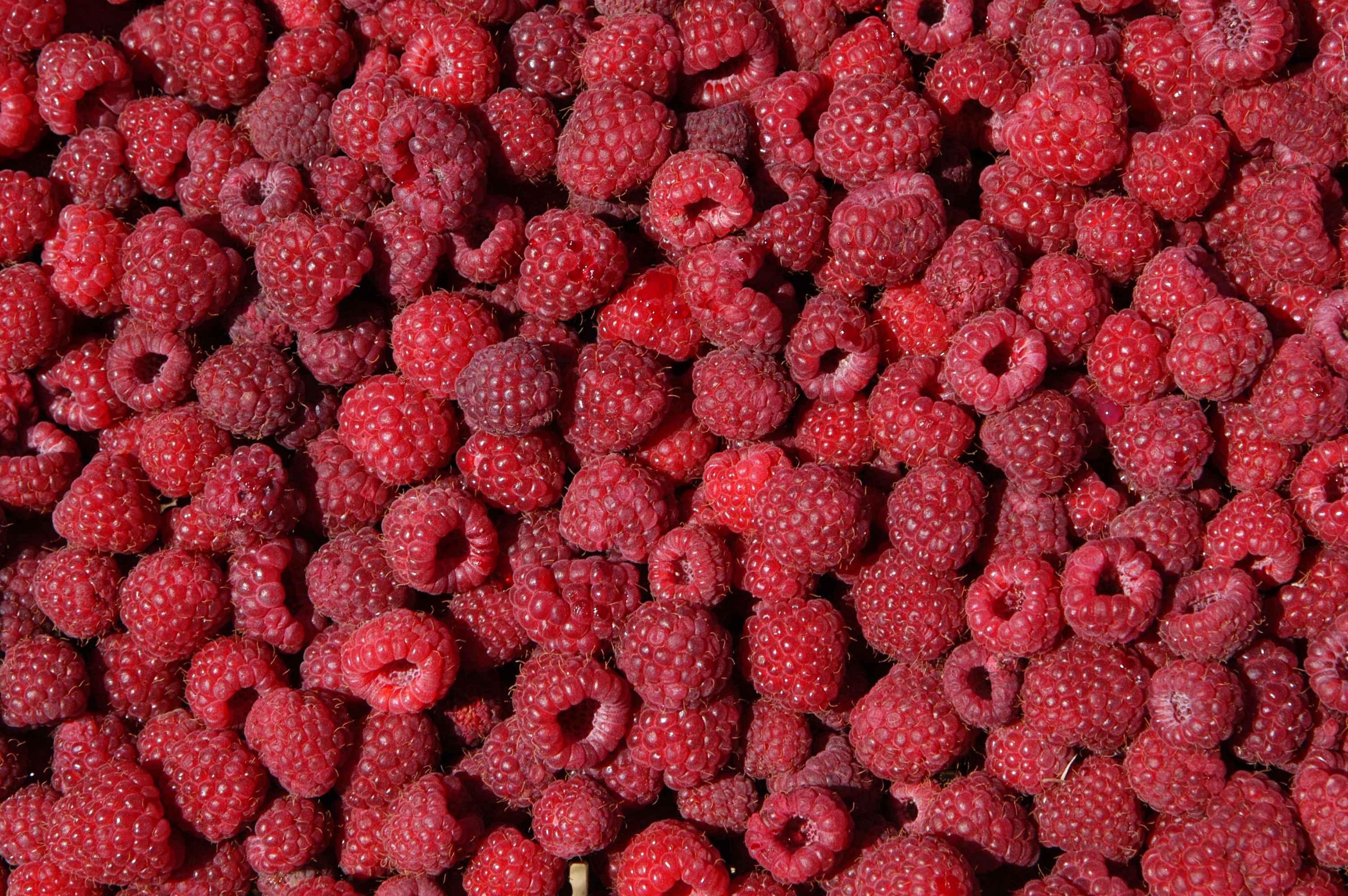 Récolte Framboises © Prevost, Domaine du Framboisier